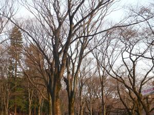 井の頭公園(2010/03/22)