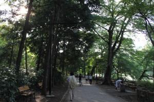 9月の井の頭公園・遊歩道