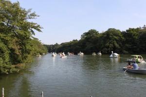 9月の井の頭公園・池