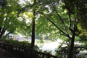 9月の井の頭公園・噴水を見ながら