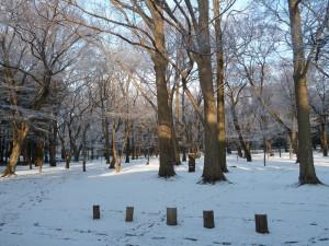 雪の日の朝の井の頭公園