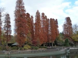 井の頭公園の紅葉2013
